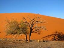 Duna ed alberi fotografie stock