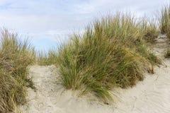 Duna, erba della duna, paesaggio della duna immagine stock libera da diritti