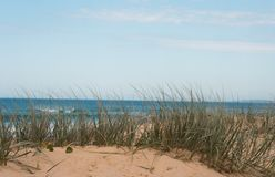 Duna gramínea na praia em um dia de verões ensolarado, ventoso Fotos de Stock