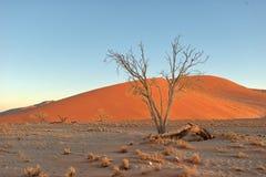 Duna 45 in Namibia del sud presa nel gennaio 2018 immagini stock