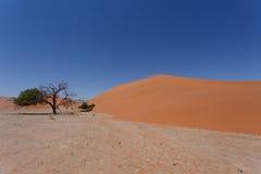 Duna 45 no sossusvlei Namíbia com árvore inoperante Fotos de Stock