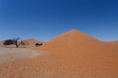 Duna 45 no sossusvlei Namíbia com árvore inoperante Fotos de Stock Royalty Free