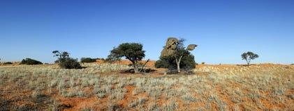 Duna vermelha em Kalahari Fotos de Stock Royalty Free