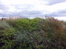 Duna vicino alla costa dell'Irlanda Fotografia Stock