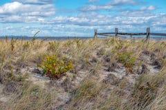 Dunas azotadas por el viento fotos de archivo libres de regalías