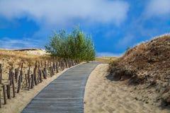 Dunas com a passagem de madeira sobre a areia perto do mar Báltico Embarque a maneira sobre a areia de dunas da praia em Lituânia fotos de stock royalty free