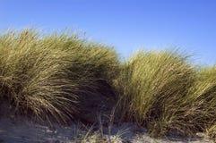 Dunas con la hierba y el cielo azul Imágenes de archivo libres de regalías
