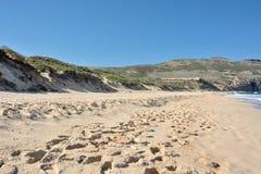 Dunas costeras Imagen de archivo libre de regalías