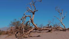 Dunas de areia bonitas do Mesquite no Vale da Morte Califórnia video estoque