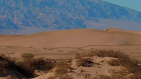 Dunas de areia bonitas do Mesquite no Vale da Morte Califórnia vídeos de arquivo