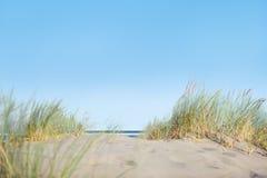 Dunas de areia com grama na praia Imagem de Stock Royalty Free