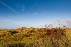 Dunas de areia com junco e o frasco cor-de-rosa fotos de stock royalty free