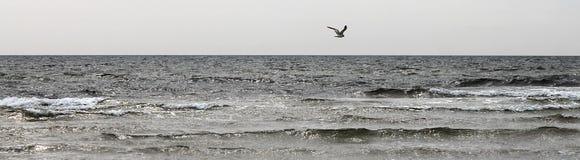 Dunas de areia da ilha bornholm - Dinamarca Fotos de Stock Royalty Free