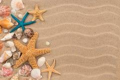 Dunas de areia da vista superior com conchas do mar e estrela do mar como o fundo vazio Foto de Stock