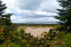 Dunas de areia de Oregon Fotografia de Stock