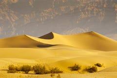 Dunas de areia do deserto Imagem de Stock