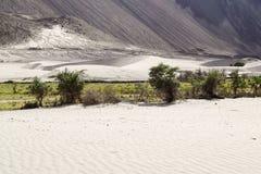Dunas de areia do vale do nubra com as árvores ao longo da cama de rio no fundo Fotografia de Stock Royalty Free