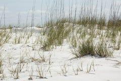 Dunas de areia e gramas da praia em Forte De Soto, Florida fotografia de stock royalty free