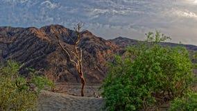 Dunas de areia em Death Valley foto de stock royalty free