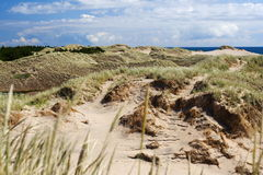 Dunas de areia em Dinamarca Imagem de Stock