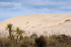 Dunas de areia enormes na ilha norte Foto de Stock Royalty Free