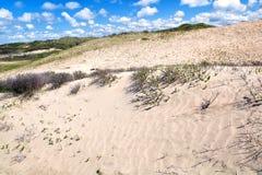 Dunas de areia na Holanda Imagem de Stock