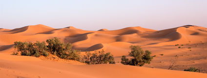Dunas de arena anaranjadas en el ergio Chebbi, Marruecos Imagen de archivo libre de regalías