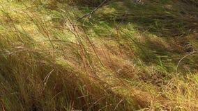 Dunas de arena de Bruneau Idaho 8 hierbas almacen de metraje de vídeo