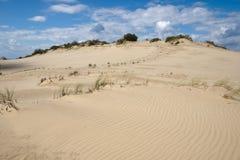 Dunas de arena de la escupida de Curonian Imagen de archivo