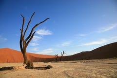 Dunas de arena de Sossusvlei Foto de archivo libre de regalías