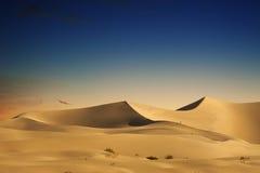 Dunas de arena del desierto Foto de archivo libre de regalías