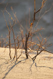 Dunas de arena del desierto Imágenes de archivo libres de regalías