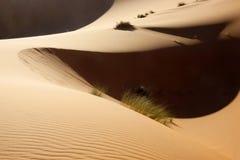 Dunas de arena del desierto de Sáhara Foto de archivo