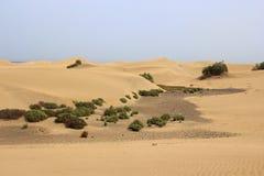 Dunas de arena del desierto en Gran Canaria Fotografía de archivo libre de regalías