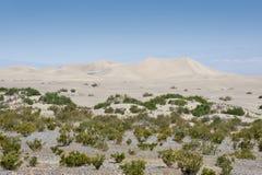 Dunas de arena del Mesquite Imágenes de archivo libres de regalías