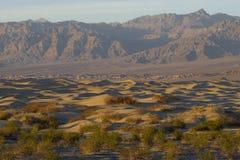 Dunas de arena del Mesquite Imagenes de archivo