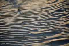Dunas de arena en la playa de Pismo Fotos de archivo libres de regalías