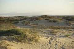 Dunas de arena en la playa de Pismo Foto de archivo
