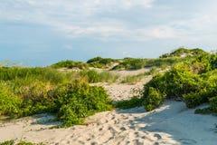Dunas de arena Hierba-cubiertas en la playa de Coquina el al frente de las quejas imagenes de archivo