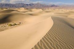 Dunas de arena planas del Mesquite Imagen de archivo libre de regalías