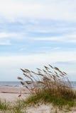Dunas de arena y avena del mar Imagen de archivo libre de regalías