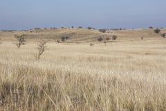 Dunas de la hierba del otoño foto de archivo libre de regalías