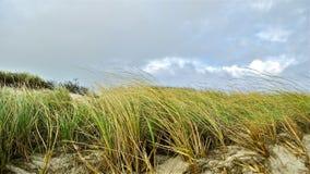 Dunas de la playa de la isla del fuego Imagenes de archivo