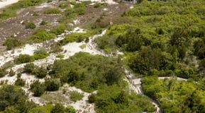 Dunas de la playa y bosque costero Fotografía de archivo