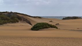 Dunas de Maspalomas - Gran Canaria - la Spagna - alla tempesta - piccola duna con le piante immagine stock