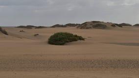 Dunas de Maspalomas - Gran Canaria - Spanien - am Sturm - kleine überwucherte Düne stockbilder
