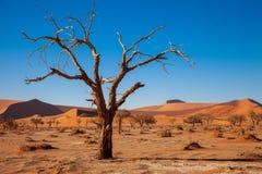 Dunas de Sossusvlei en los parques nacionales del namib del desierto de Namibia entre el desierto y la sabana fotos de archivo