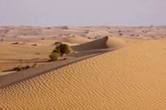 Dunas do deserto fotografia de stock royalty free