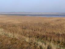 Dunas do parque nacional de Texel Fotos de Stock