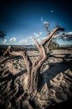 Dunas do Vale da Morte de madeira em HDR imagens de stock